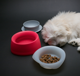 Yummy Travel Pet Bowls Food Storage